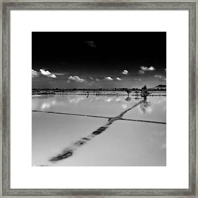 Rice Fields Cambodia Framed Print by Stelios Kleanthous
