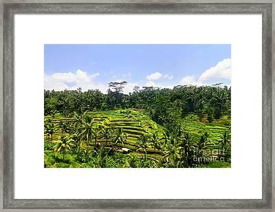 Rice Terrace In Bali Framed Print by Lars Ruecker