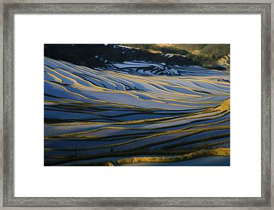 Rice Terraces Of Yuanyang 1 Framed Print by Lanjee Chee