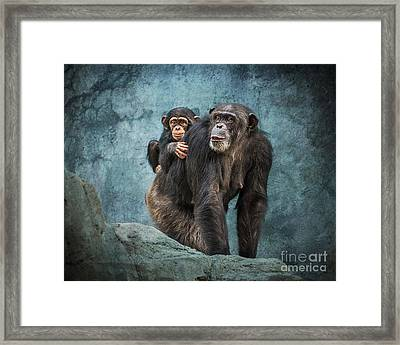 Ride Along Framed Print by Jamie Pham