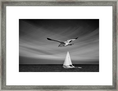 Ride The Wind Framed Print by Laura Fasulo
