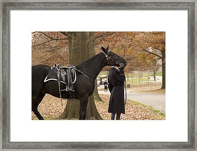 Riderless Horse Framed Print by Terry Rowe