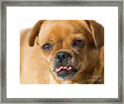 Ridicule Doggy Framed Print by Sinisa Botas