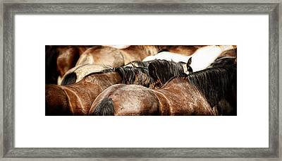 Riding Herd Framed Print by Lincoln Rogers