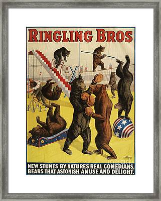 Ringling Bros 1900s Bears Performing Framed Print by The Advertising Archives
