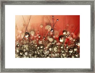 Riot Red Cactus Sparkles Framed Print by Sharon Johnstone