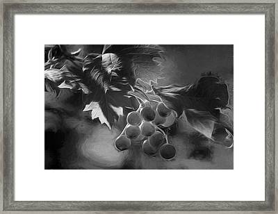 Ripening Berries Framed Print by Donna Kennedy