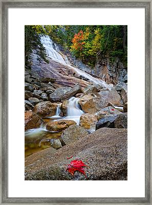 Ripley Falls And Red Maple Leaf Framed Print by Jeff Sinon