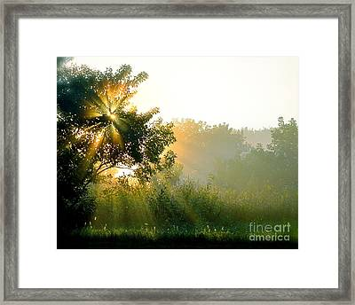 Rise And Shine Framed Print by Sue Stefanowicz