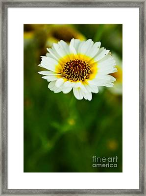 Rising Alone Framed Print by Syed Aqueel