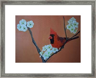 Rita's Redbird For Kevin Framed Print by Barbara Samples