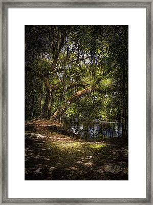River Oak Framed Print by Marvin Spates