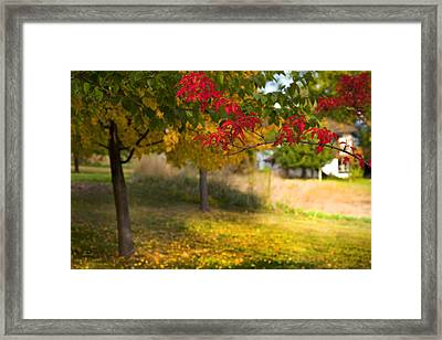 Riverbend Orchard Framed Print by Theresa Tahara