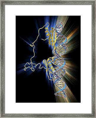 Rna Editing Enzyme Framed Print by Laguna Design