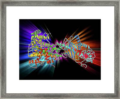 Rna Interference Protein Framed Print by Laguna Design