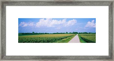 Road Along Corn Fields, Jo Daviess Framed Print by Panoramic Images