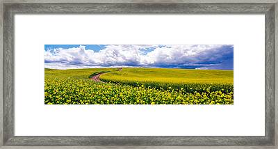 Road, Canola Field, Washington State Framed Print by Panoramic Images