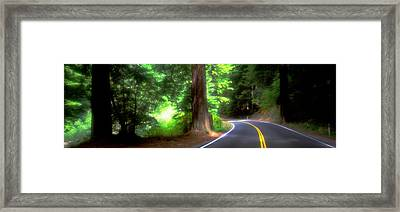 Road, Redwoods, Mendocino County Framed Print by Panoramic Images