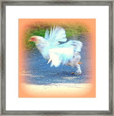 The Road Runner Who Tries To Fly  Framed Print by Hilde Widerberg