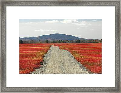 Road Through Autumn Blueberry Maine Framed Print by Scott Leslie