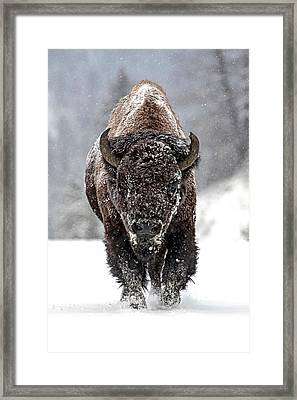 Road Warrior Framed Print by Sandy Sisti