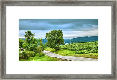 Roadside Vineyard Framed Print by Steven Ainsworth