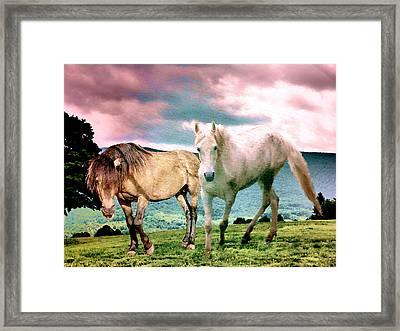 Roaming Stallions Framed Print by Patricia Keller