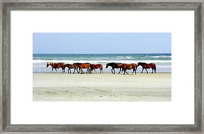 Roaming Wild And Free Framed Print by Kim Galluzzo Wozniak