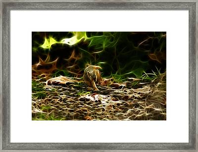 Robbie The Squirrel 0477 - F Framed Print by James Ahn