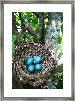 Spring Life Framed Print by Shelby  Young