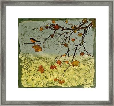 Robin In Maple Framed Print by Carolyn Doe