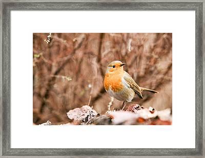 Robin Framed Print by Mark Severn
