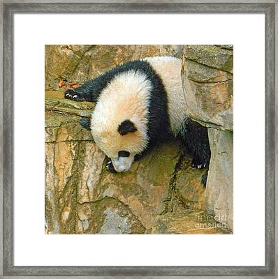 Rock Climbing - Baby Bao Bao To The Rescue Framed Print by Emmy Marie Vickers