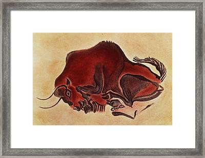 Rock Painting Of A Bison, Late Magdalenian, 13000 Bc Framed Print by .