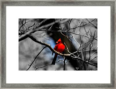 Rock The Red Framed Print by Lisa Wooten