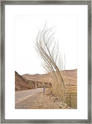 Rockabilly Framed Print by Renato Sensibile