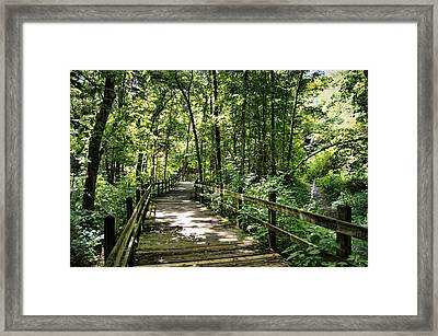 Rockbridge Summer Framed Print by Cricket Hackmann