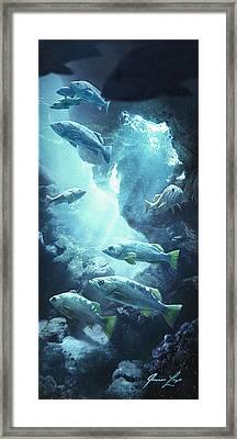 Rockfish Sanctuary Framed Print by Javier Lazo