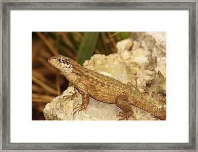 Rockin' Framed Print by Lynda Dawson-Youngclaus