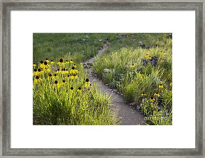 Rocky Top Trail Framed Print by Dennis Hedberg