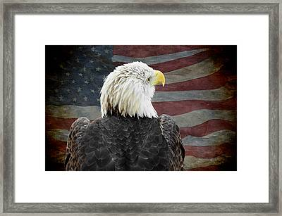 American Bald Eagle Framed Print by Steven  Michael