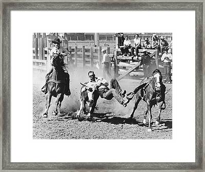 Rodeo Cowboy Bulldogging Framed Print by Underwood Archives
