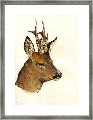 Roe Deer Head Study Framed Print by Juan  Bosco