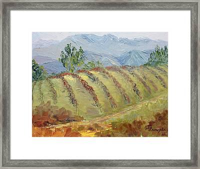 Rolling Vineyard Framed Print by Inka Zamoyska