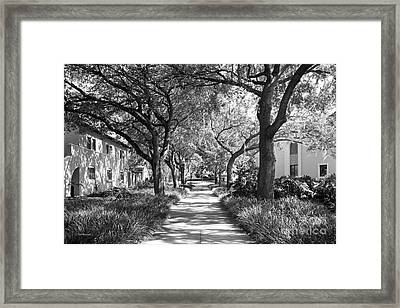 Rollins College Landscape Framed Print by University Icons
