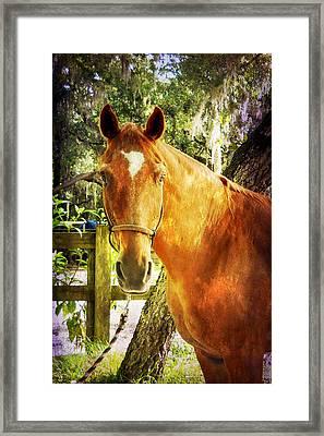 Romeo Framed Print by Judy Hall-Folde