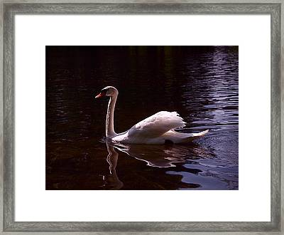 Romeo Or Juliet Framed Print by Rona Black