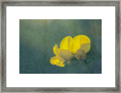 Rondo Floral - S08at2 Framed Print by Variance Collections