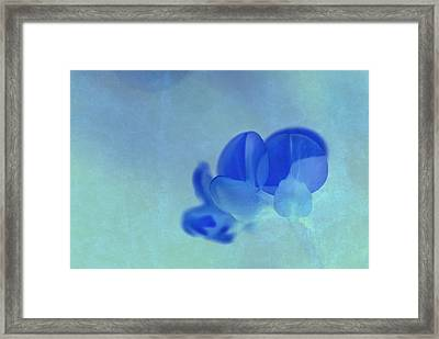 Rondo Floral  S21f2tc Framed Print by Variance Collections