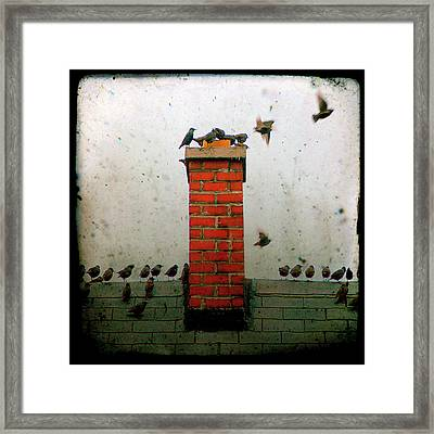 Roof Top Hoppers Framed Print by Gothicolors Donna